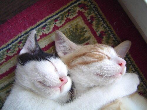 千奇百怪的猫咪睡姿大比拼