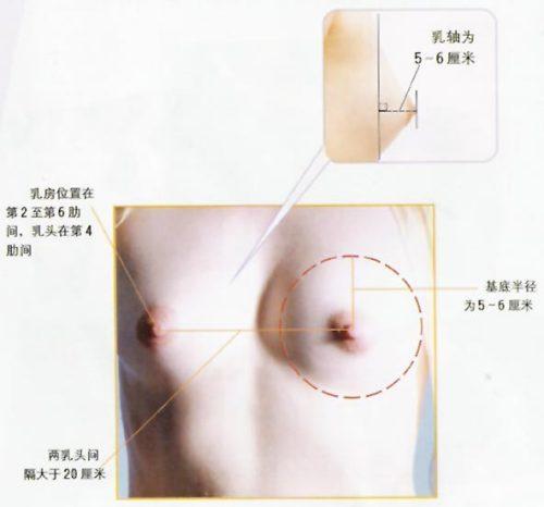 美女乳房美女乳头美丽乳房美女的乳房