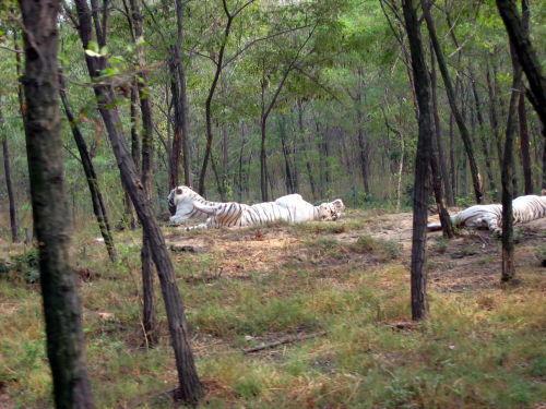 浏览秦皇岛野生动物园--抓拍动物图片集