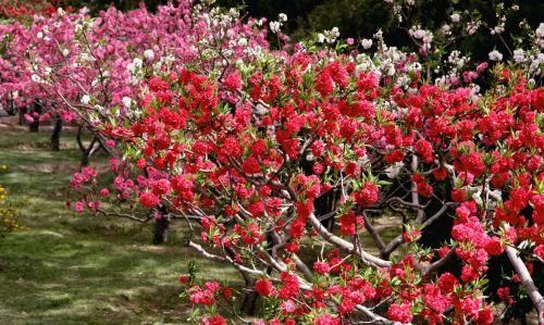 果树嫁接舌接法图解