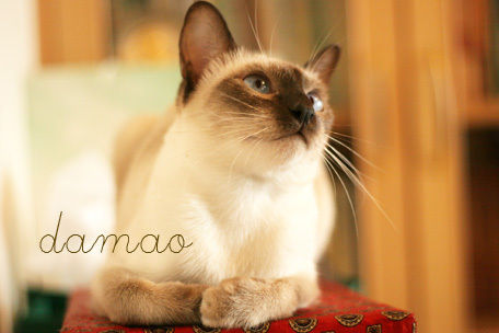 壁纸 动物 猫 猫咪 小猫 桌面 456_304