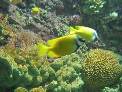 水中小动物
