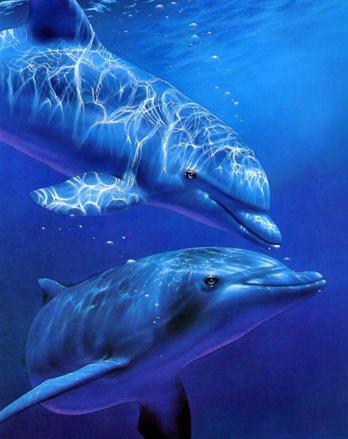 铎就是这样爱海豚,爱到下辈子决定做一只可爱的海豚!