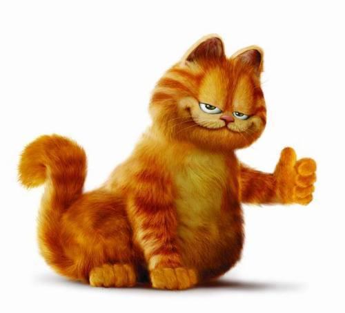 独一无二的加菲猫