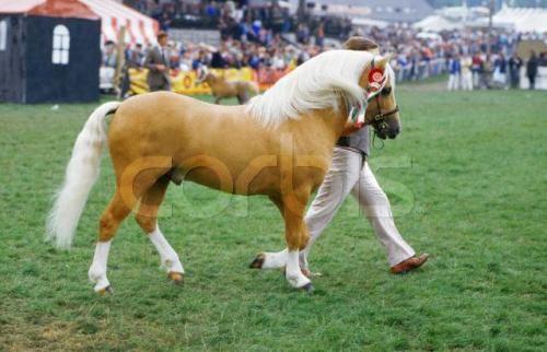还有可爱的小型马~!矮矮的,当宠物马或者给小小孩骑的~~呵呵~!