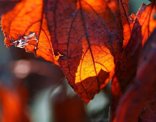 树叶盒子折法图解