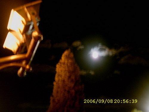 圆圆的月亮挂天上-孤独的cowberry-我的搜狐